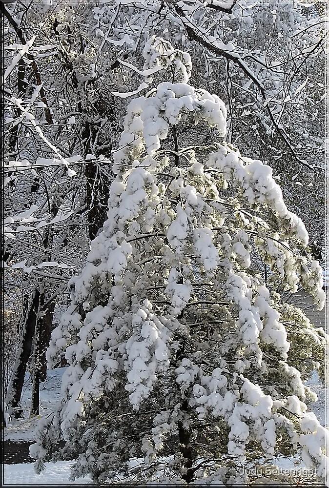 Winter Day by Judy Seltenright