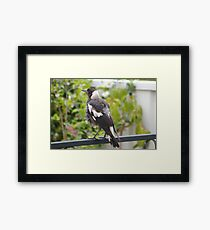 Bird in the Backyard Framed Print