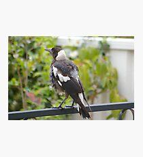 Bird in the Backyard Photographic Print