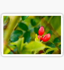 Rosehip  Sticker