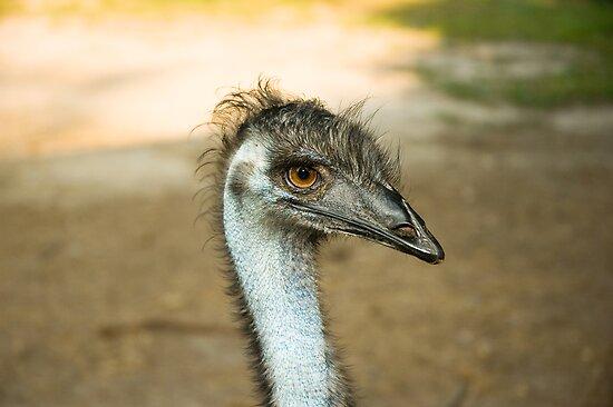 """Emu Eyes by Arthur """"Butch"""" Petty"""