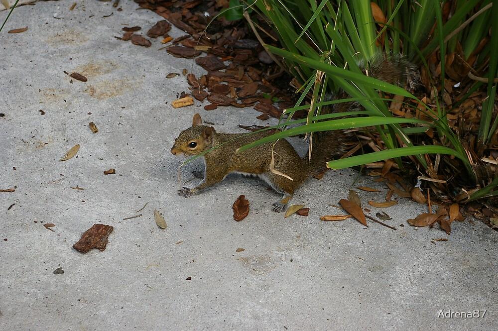Squirrel by Adrena87