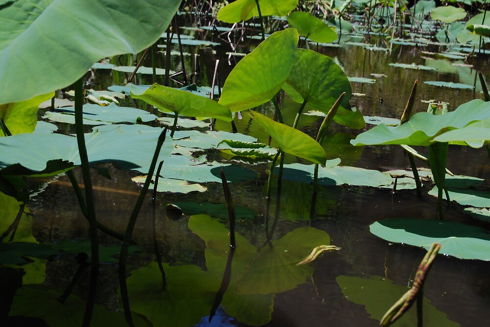 Lotus Pond by Princessbren2006