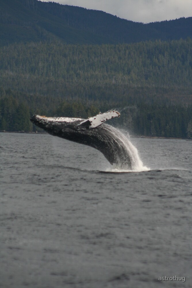 humpback whale breaching by astrothug