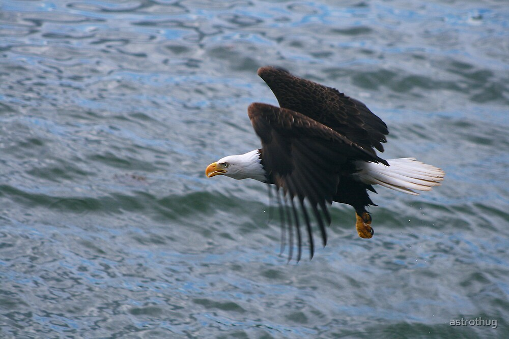 eagle on the ocean by astrothug