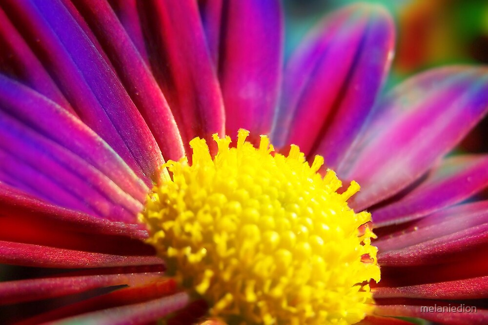 Daisy Mum by melaniedion