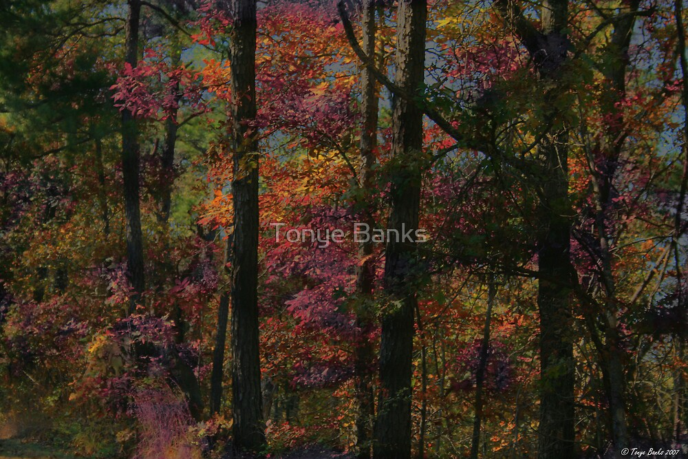 Fairykist Trees by Tonye Banks