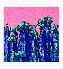 Cartoon Summer Cacti In The Pink  Photographic Print
