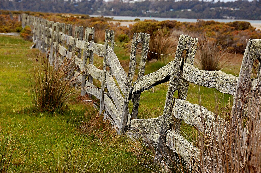 Old Fence in Tas by patapping