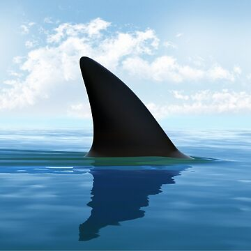 Shark Fin by lucianobdn