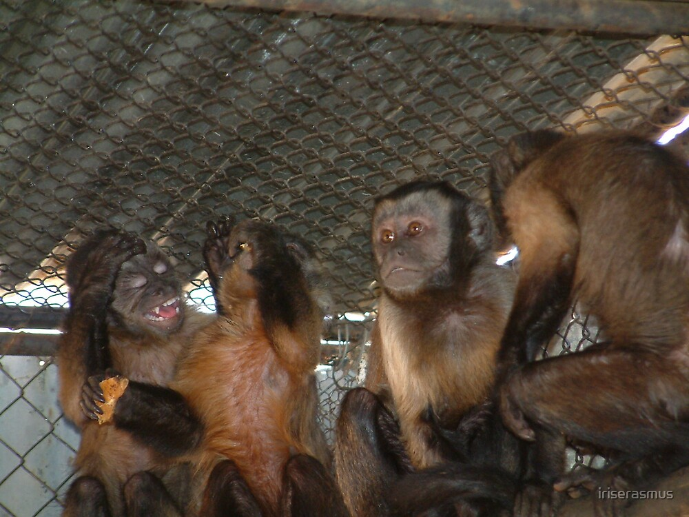 Capuchins by iriserasmus