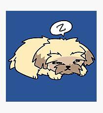 Sleepy Pupper Photographic Print