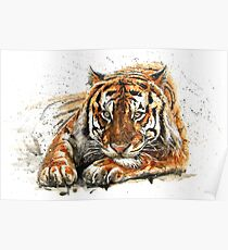 Tiger watercolor Poster