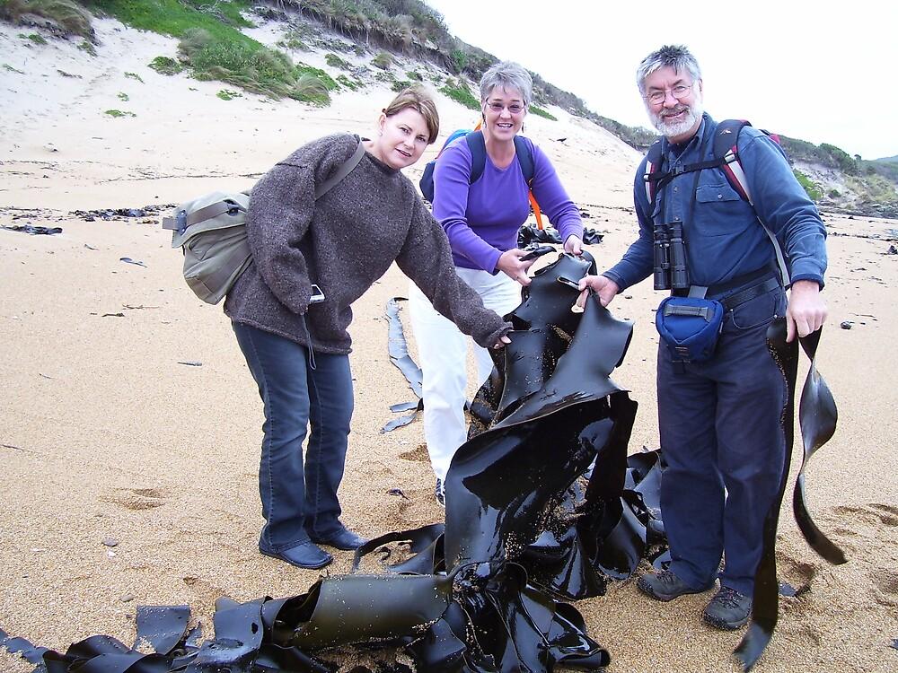 plenty of bull kelp/seaweed at Trial Harbour beach, Tasmania by gaylene