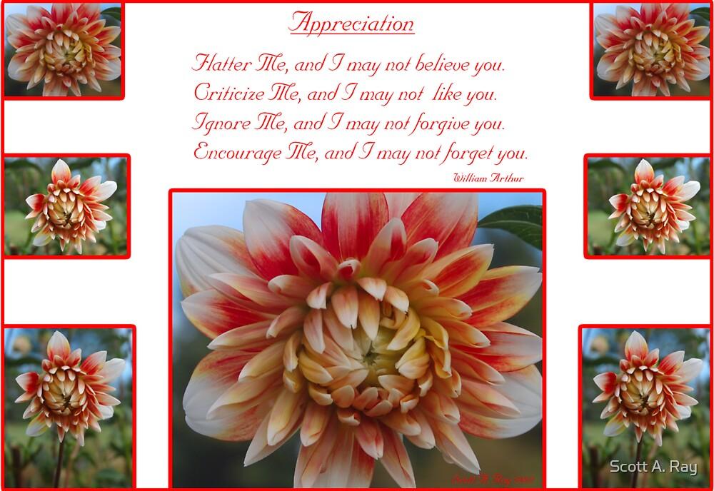 Appreciation by Scott A. Ray