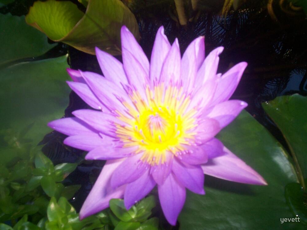 purple by yevett