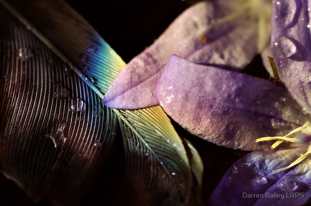 Xochiquetzal by Darren Bailey LRPS