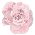 Pretty pink rose flower watercolour by Sandra O'Connor