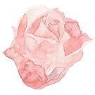 Pretty red rose flower watercolour by Sandra O'Connor