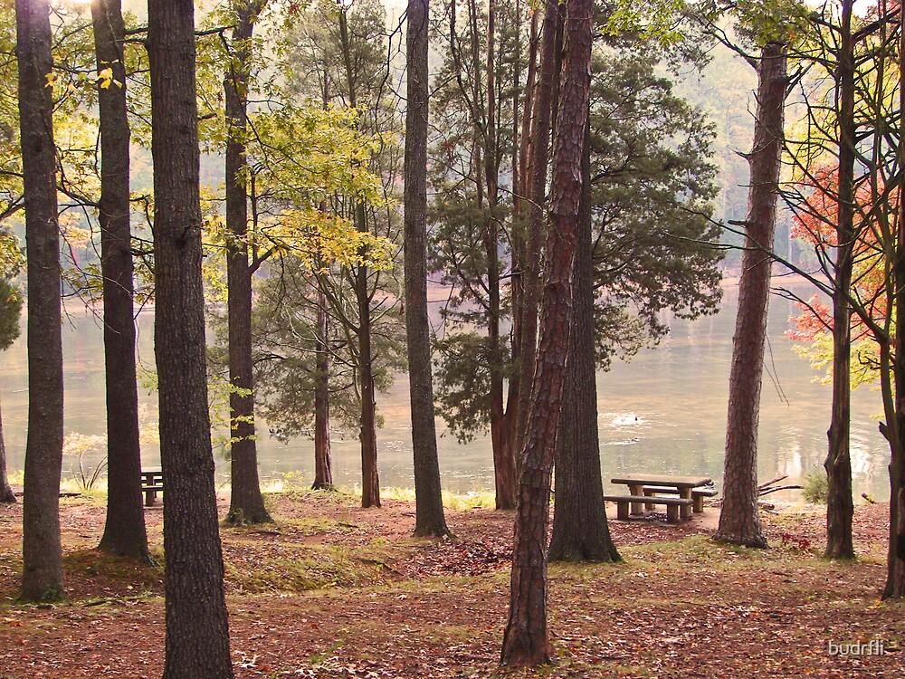 through the trees by budrfli