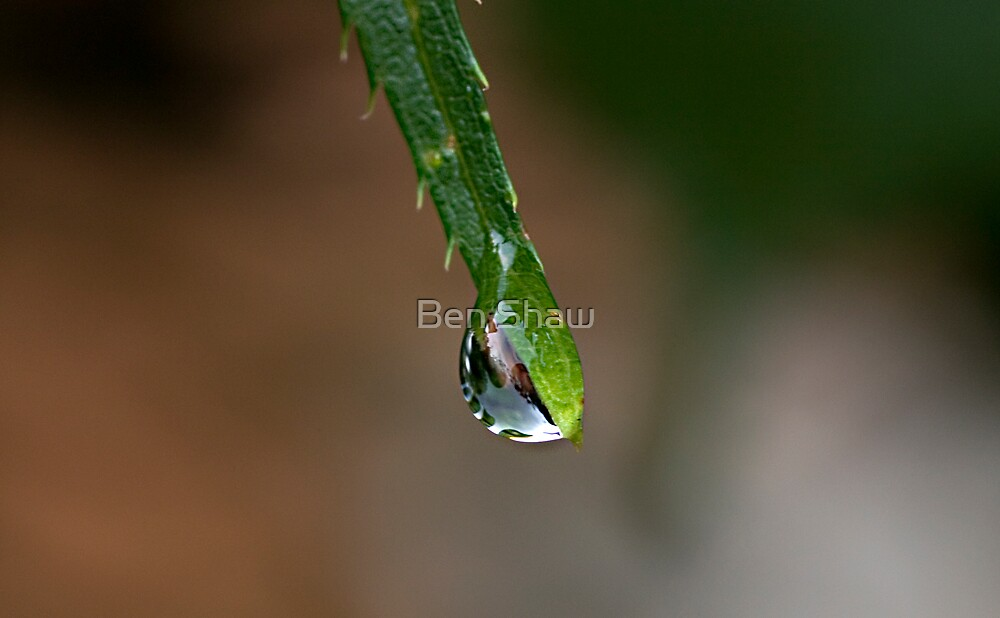 Droplet by Ben Shaw