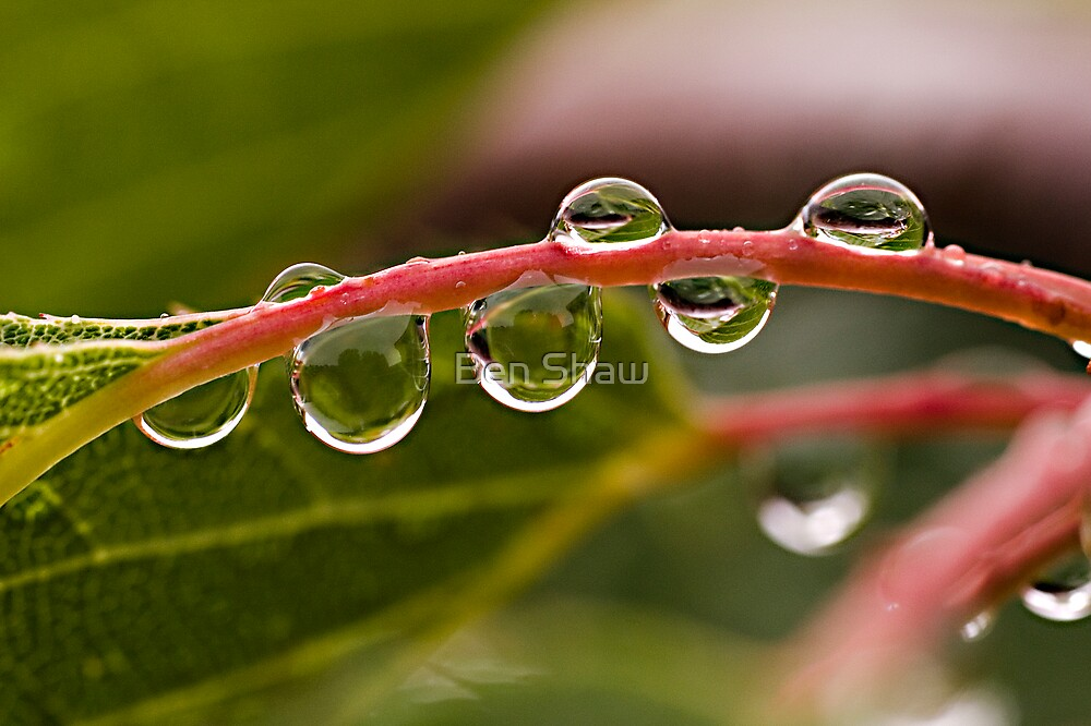 Droplets by Ben Shaw