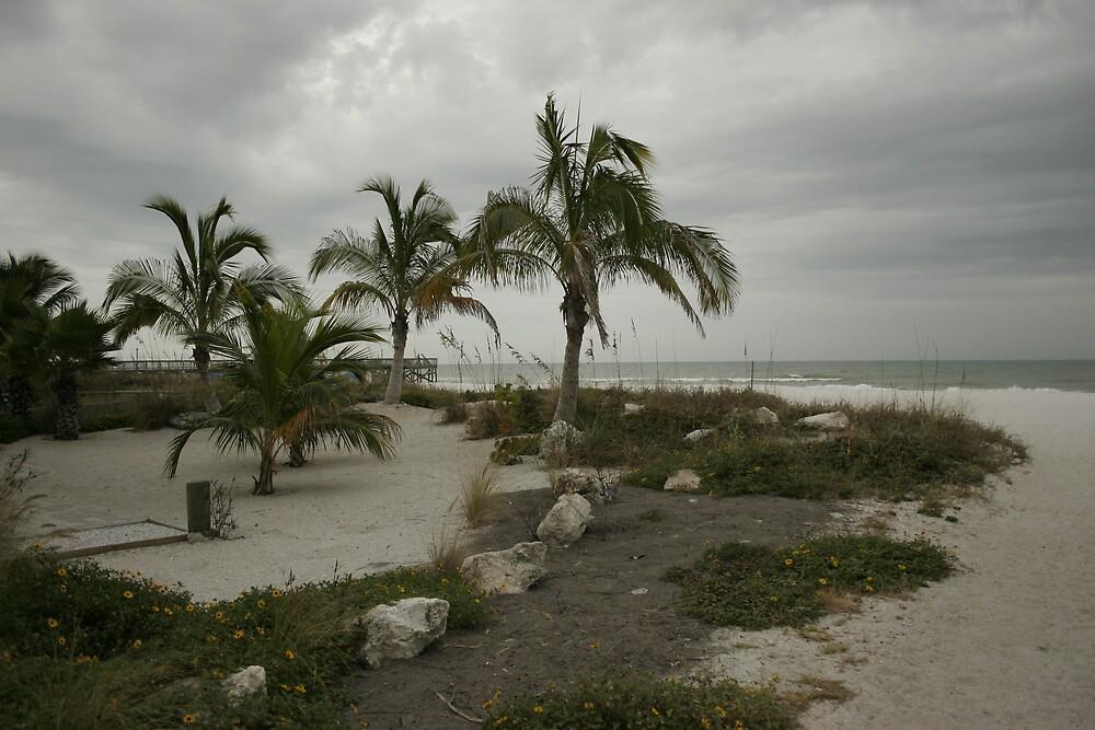 Beach Oasis by npiacpka