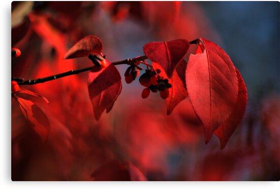 red leaves consumed in bokeh by Robert Burns Miller
