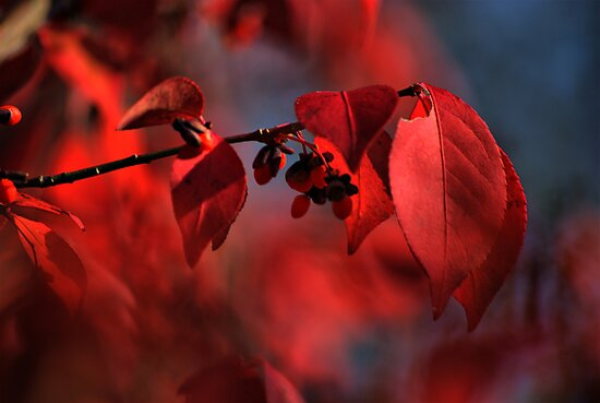 red leaves consumed in bokeh by Robert Burns Miller