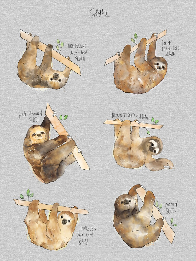 Sloths by AmyHamilton
