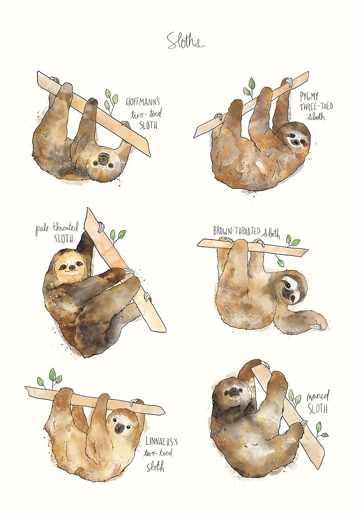 Sloths by Amy Hamilton