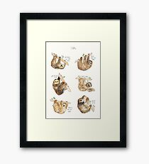 Sloths Framed Print