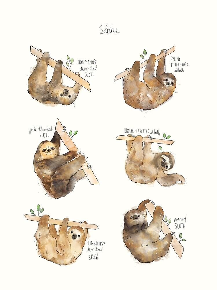 Sloths by AmyHamilton