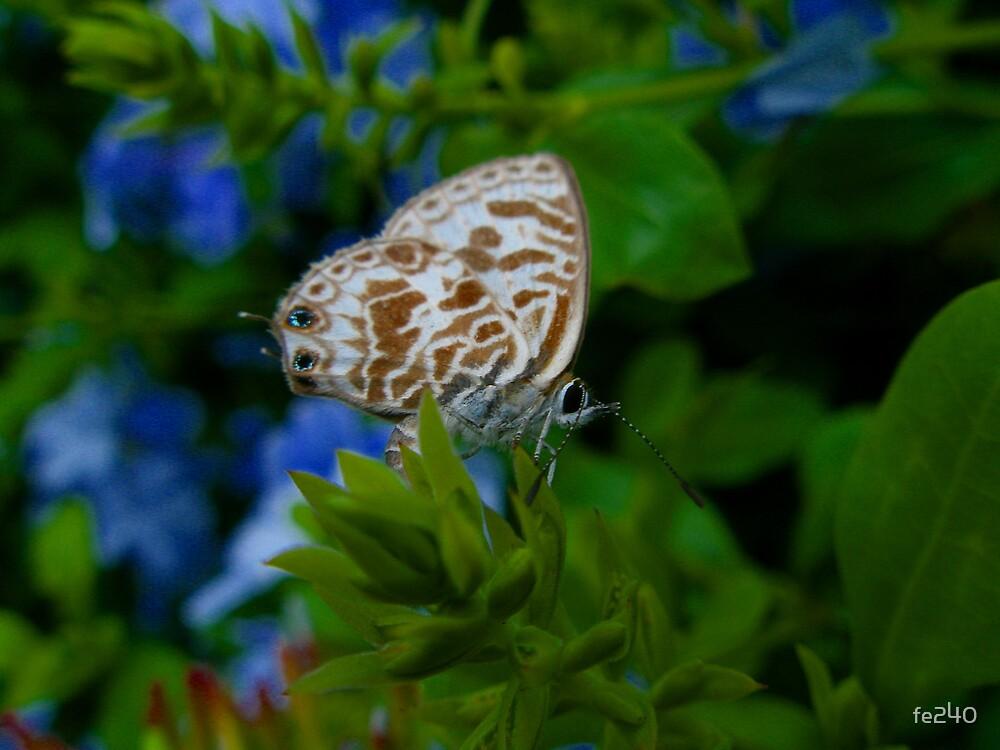 Butterfly by fe240