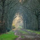 On the lane towards summer time by jchanders