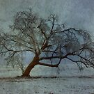 Winter Tree by Sherryll  Johnson