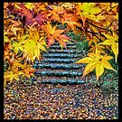 Late Fall Scene Yellow Maple Leaves Stone Stairs by Beverly Claire Kaiya
