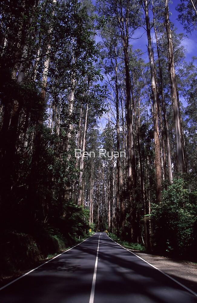 Timber Corridor by Ben Ryan