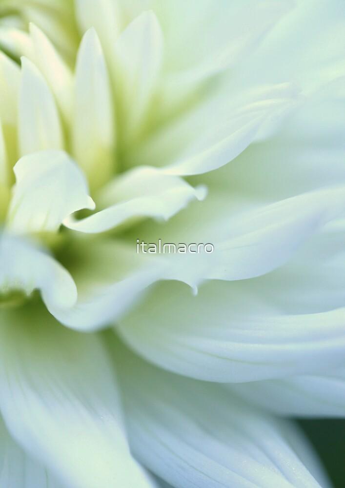 blooming by italmacro
