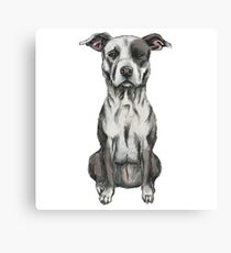 Brown and White Sitting Pit Bull Rendering Canvas Print