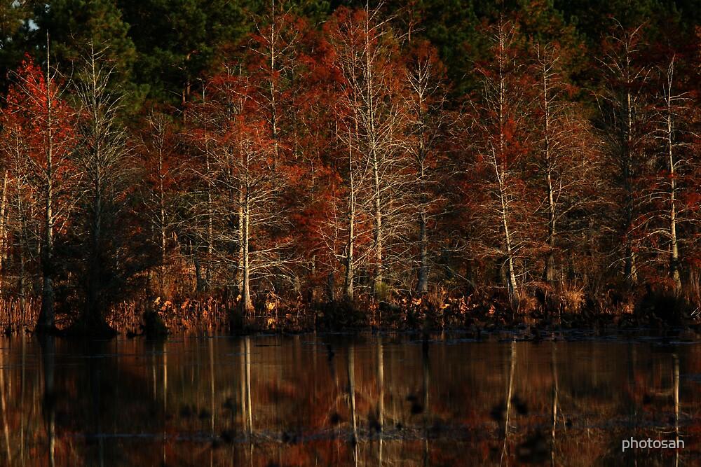 A pond at dusk by photosan