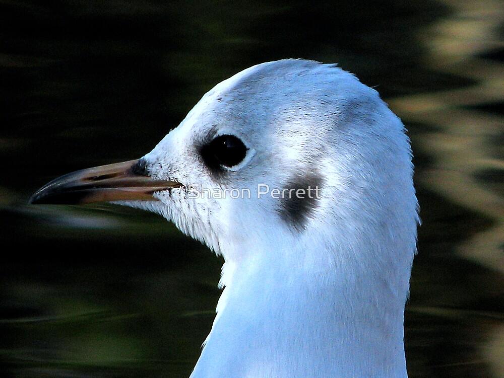 Gull - In profile by Sharon Perrett