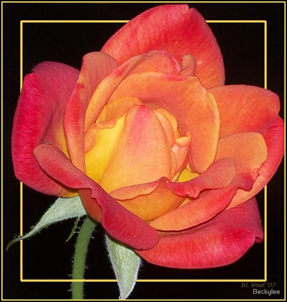 Rose Bud by Beckylee
