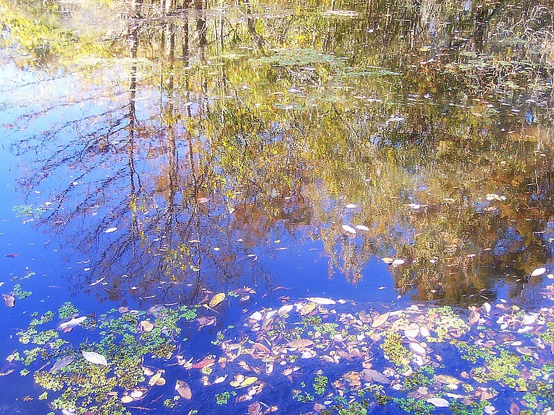 Reflections by garain