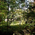 Backyard of a youth hostel by georgiegirl