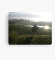 Vineyard 1 Canvas Print