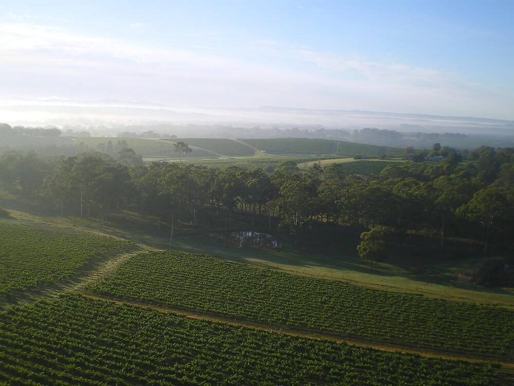 Vineyard 2 by Tim Butt