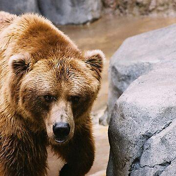 Bear Stare by JonathanEpp