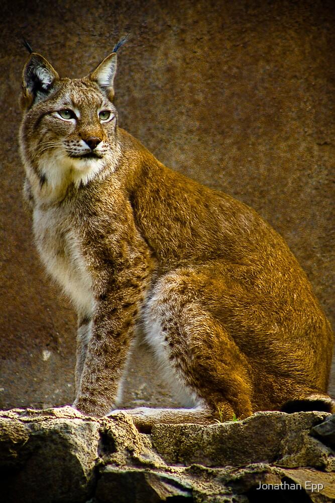 Big Cat by Jonathan Epp