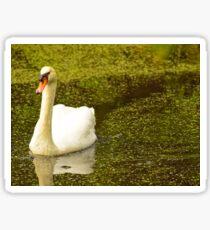 The Swan Trail Sticker